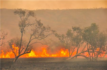 How One Travel Advisor is Dealing with the Fires Raging Across Australia