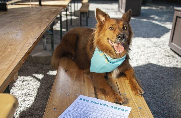 Visit North Carolina Dog Travel Agent