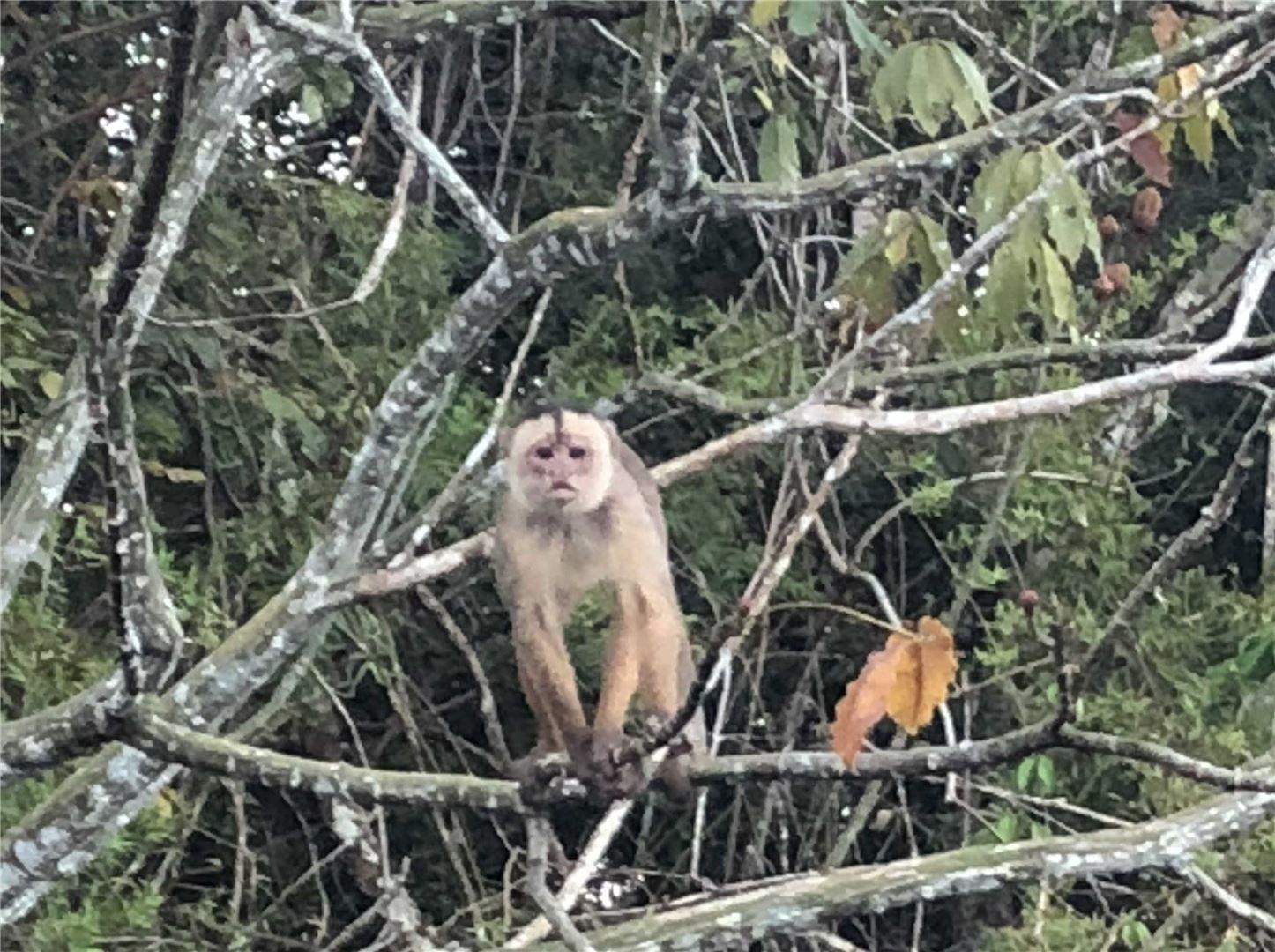 Amazon nature river cruises animals monkey vacation travel
