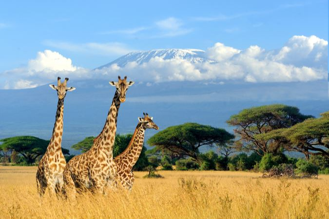 African Travel Inc. Shares Updated Resources and Offerings for Advisors