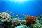MSC Cruises' Foundation Calls for Support to Help Save Coral Reefs