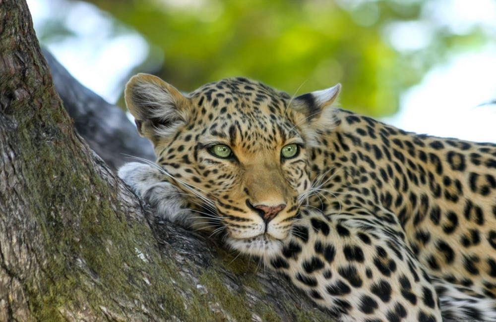Exploring Africa: A Tanzanian Camping Safari Adventure