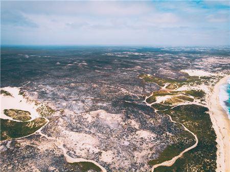Advisors Mourn Australia Brush Fire Devastation, But Take Action as Well