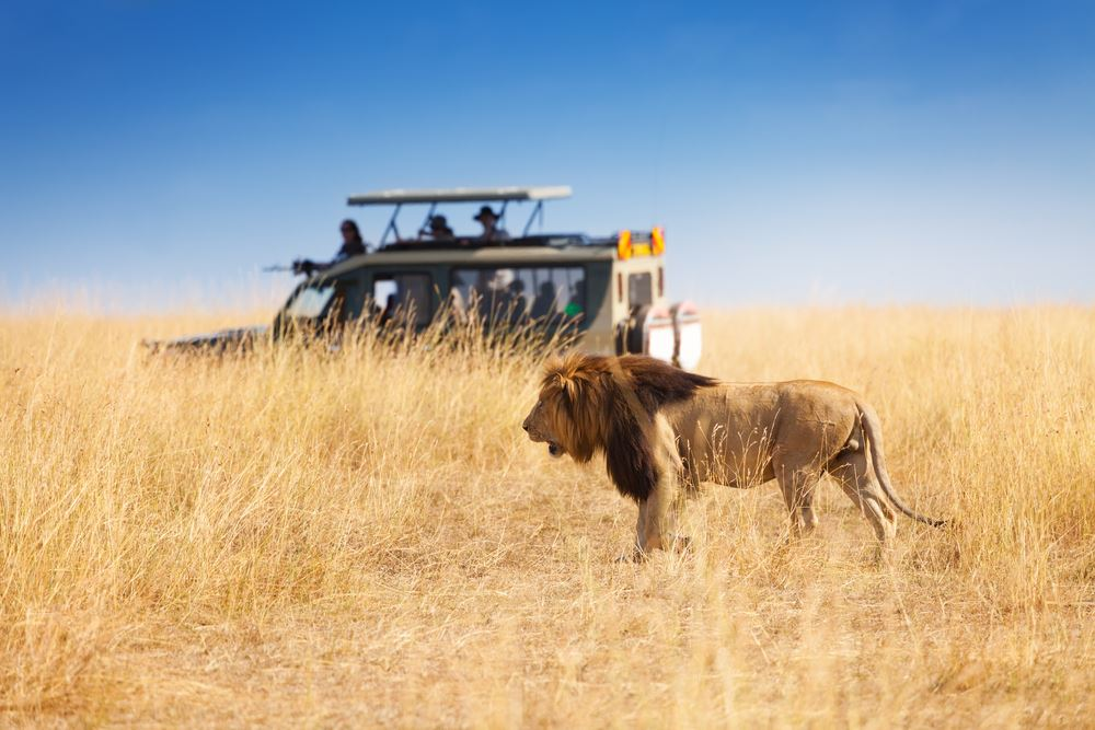 What Does It Take to Build a Successful African Safari Business?