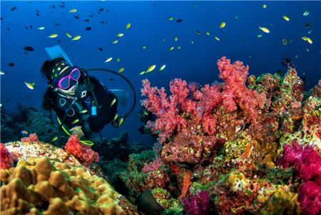 Scuba Vacations Can Be Lucrative and Complex for Travel Advisors