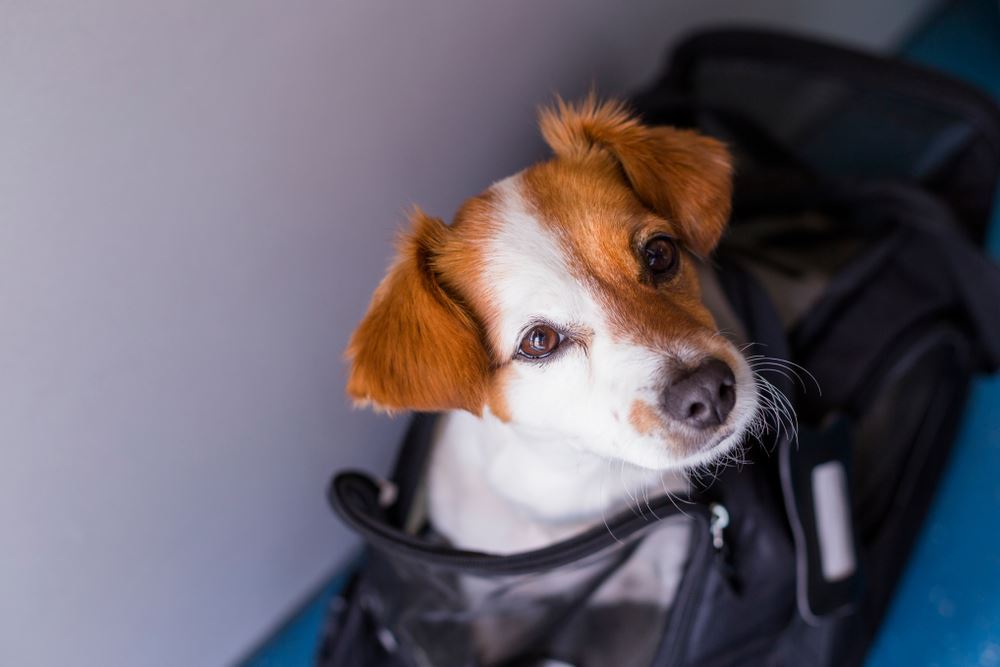 U.S. Updates Travel Policies for Service Animals
