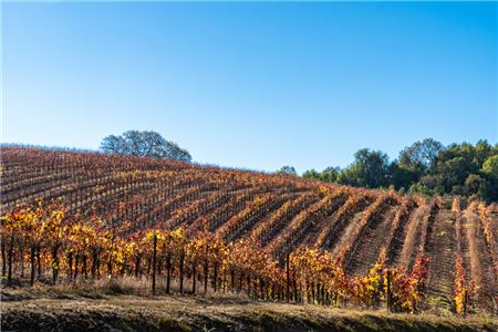 Sonoma County is Open for Tourism