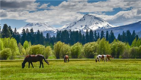 Selling Solace: Four Reasons to Gaze at Mountains