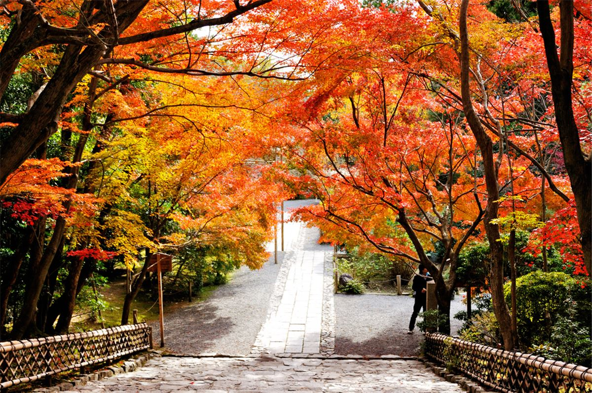 Four seasons landscape banners set 469993 - Download Free