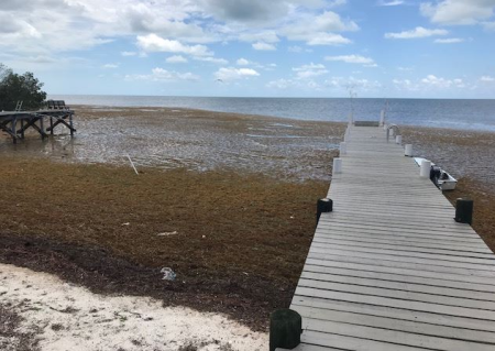 Huge Masses of Seaweed Washing Up in Florida and Mexico
