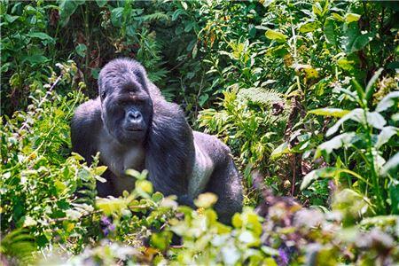 African Travel Opens Rwanda & Gorilla Trekking Fam for Travel Agents