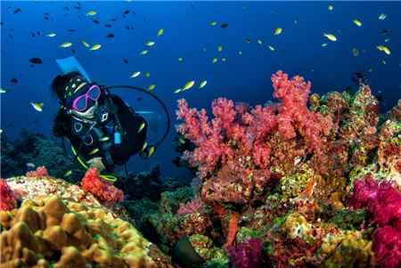 Divers Need Travel Advisor Expert Guidance