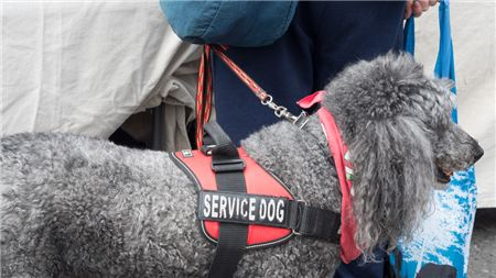 What to Know About Flying with a Service Animal