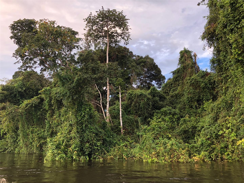 Amazon River Cruises Jungle Vegatation Thick Jungle