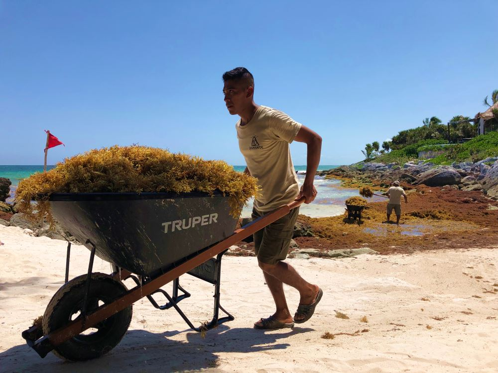 Mexico and the Caribbean's Seaweed Problem Isn't Going Away