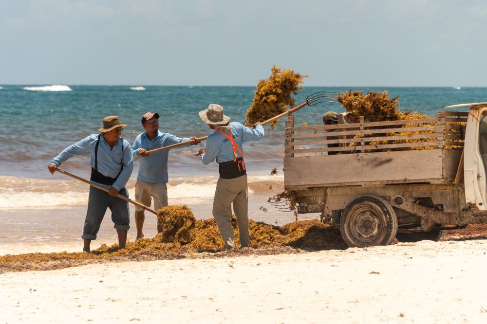 Bahia Principe Tackles Seaweed Problem in Mexico
