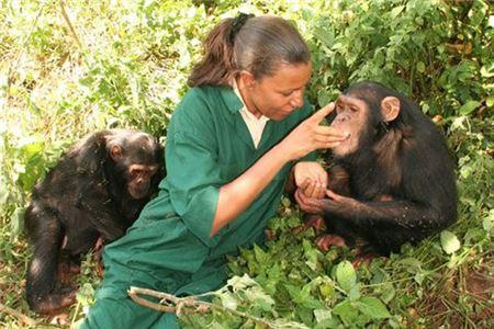 'Mama Chimp' Guides Uganda Tourism Toward a New Era