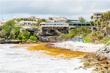 Heaps of Seaweed Plaguing Caribbean Beaches, Affecting Tourism