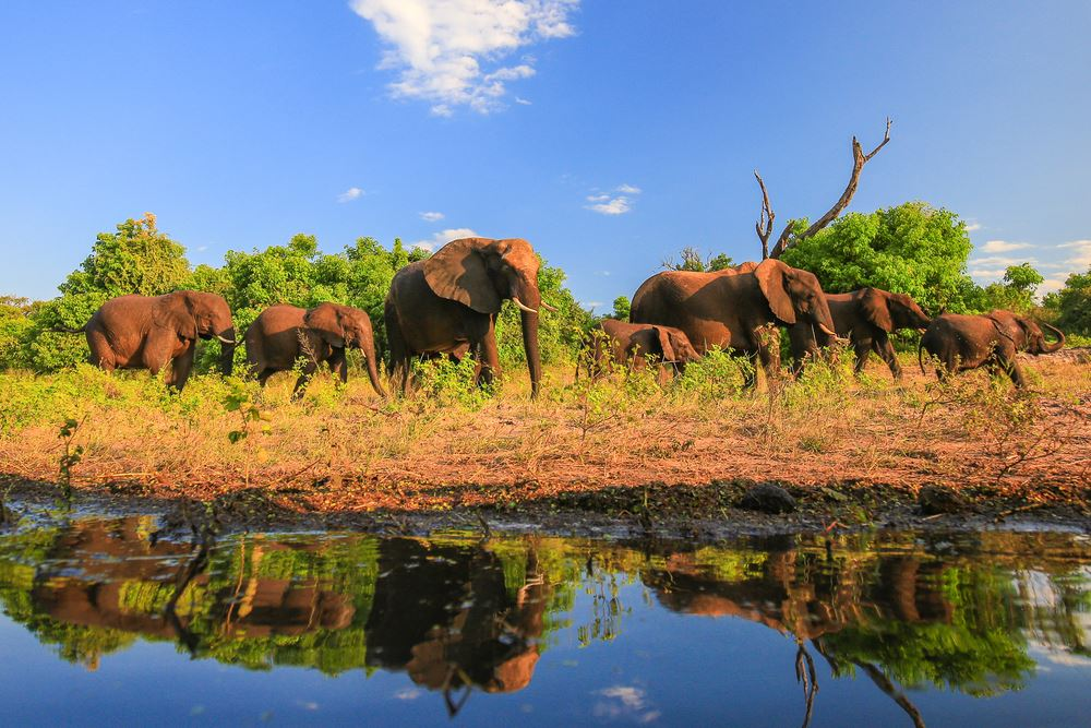 Travel Agents Can Win a Luxury Safari with African Travel