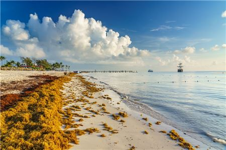 Arrival of Sargassum Seaweed is Inevitable, But Forecast Predicts Less This Year